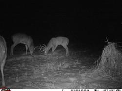 deer trail pics (15)