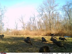 turkey trail pics a (31)