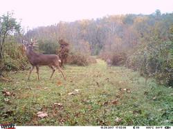 deer trail pics (21)