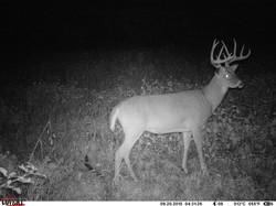 deer trail pics (68)