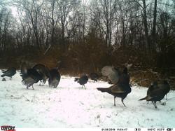 turkey trail pics a (20)