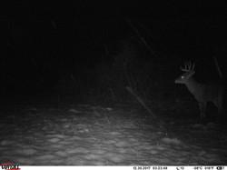 deer trail pics (31)