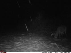 deer trail pics (29)