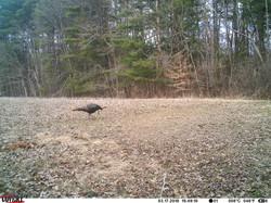 turkey trail pics a (36)