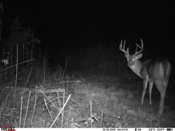 deer trail pics (73)