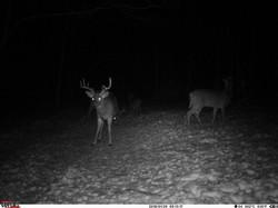 deer trail pics (8)