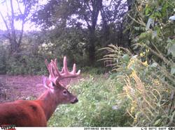 deer trail pics (41)