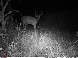 deer trail pics (46)