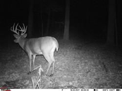 deer trail pics (33)