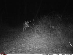 deer trail pics (66)