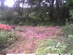deer trail pics (38)