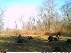turkey trail pics a (27)