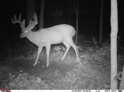 deer trail pics (57)