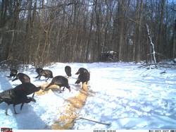turkey trail pics a (40)