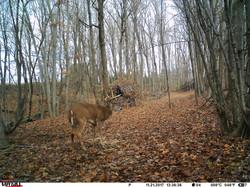 deer trail pics (6)