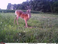 deer trail pics (54)