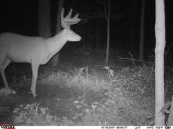 deer trail pics (40)