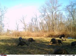 turkey trail pics a (28)