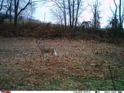 deer trail pics (70)