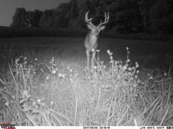 deer trail pics (55)