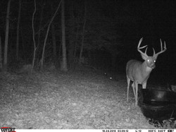 deer trail pics (60)