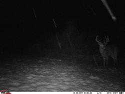 deer trail pics (30)