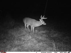 deer trail pics (17)