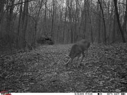 deer trail pics (58)