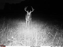 deer trail pics