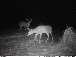 deer trail pics (16)