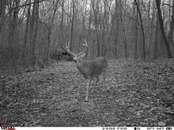 deer trail pics (59)