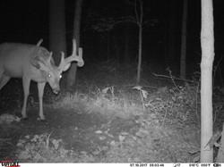 deer trail pics (39)