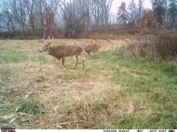 deer trail pics (49)