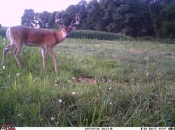 deer trail pics (53)