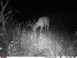 deer trail pics (47)