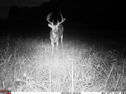 deer trail pics (5)