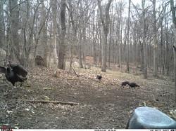 turkey trail pics a (48)