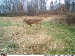 deer trail pics (48)