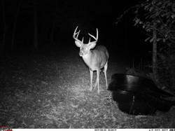 deer trail pics (11)