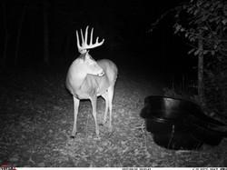 deer trail pics (10)