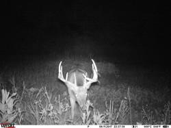 deer trail pics (28)