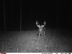 deer trail pics (64)