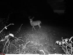 deer trail pics (19)