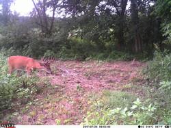deer trail pics (42)