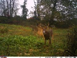 deer trail pics (27)