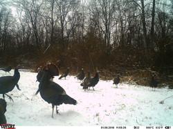 turkey trail pics a (22)