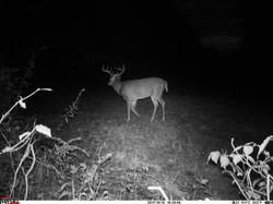deer trail pics (20)