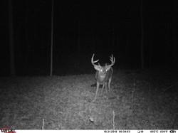 deer trail pics (62)