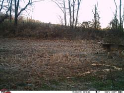 deer trail pics (72)