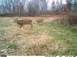 deer trail pics (50)